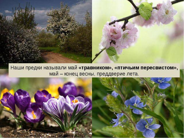 Наши предки называли май «травником», «птичьим пересвистом», май – конец весн...