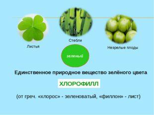 зеленый Листья Стебли Незрелые плоды Единственное природное вещество зелёного