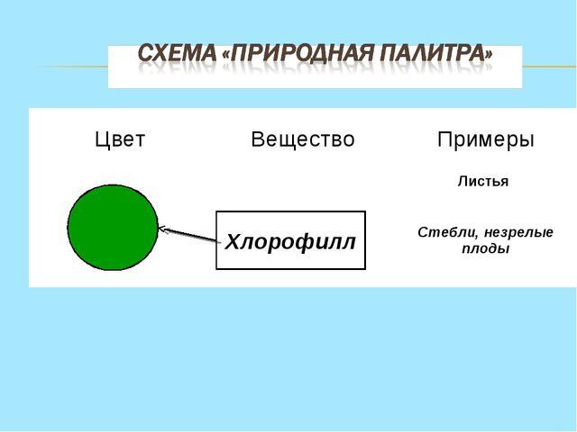 Хлорофилл ЦветВеществоПримеры Листья Стебли, незрелые плоды