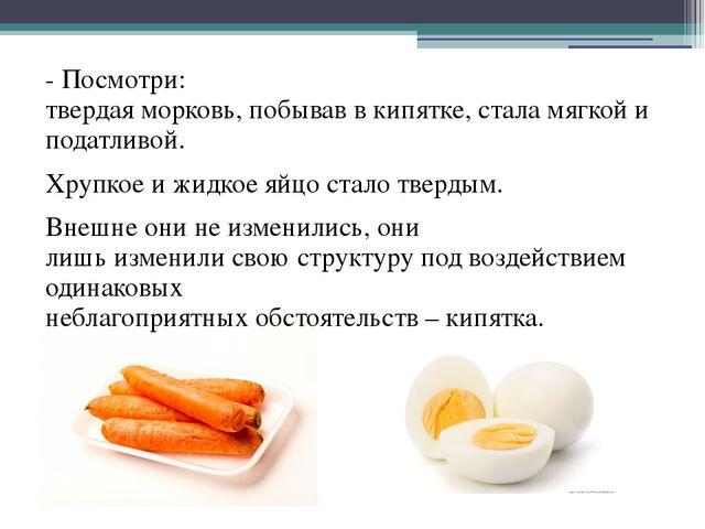 - Посмотри: твердая морковь, побывав в кипятке, стала мягкой и податливой. Хр...