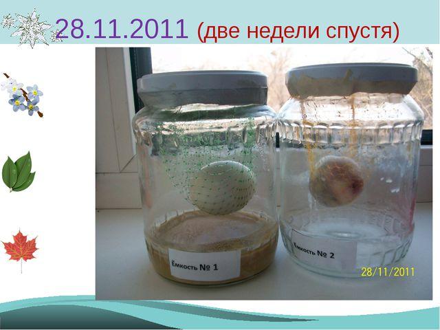 28.11.2011 (две недели спустя)