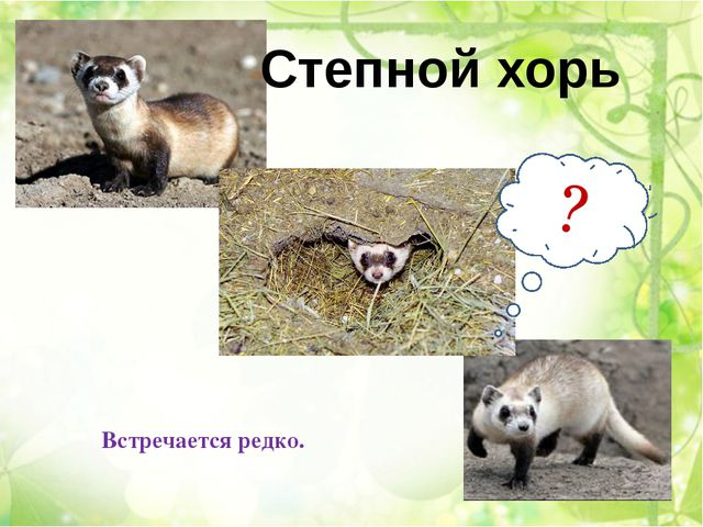 Неядовитая изящная змея. Реликты степной фауны, в Иркутской области сохранивш...