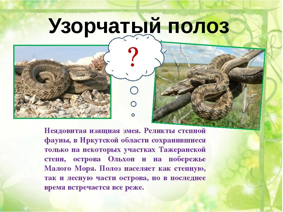 Тело монгольской жабы тяжелое и неуклюжее. Относительно короткие толстые зад...