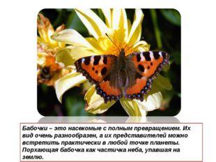Бабочки – это насекомые с полным превращением. Их вид очень разнообразен, а и