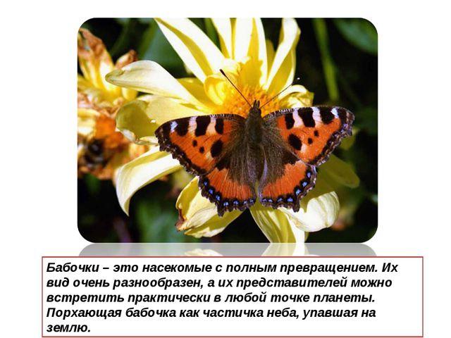 Бабочки – это насекомые с полным превращением. Их вид очень разнообразен, а и...