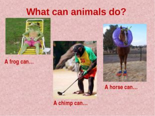 What can animals do? A frog can… A chimp can… A horse can…