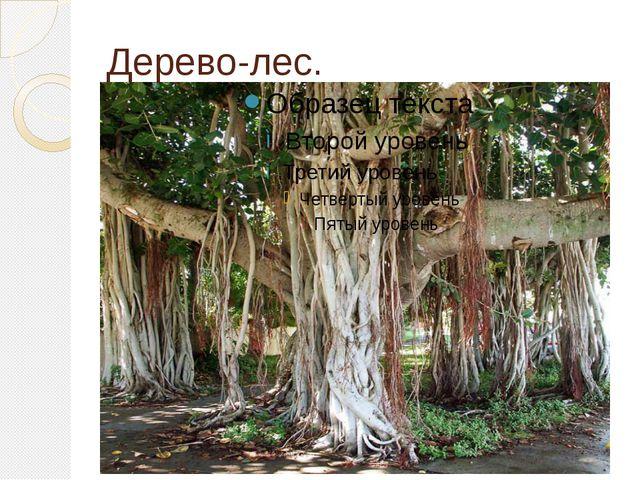 Дерево-лес.