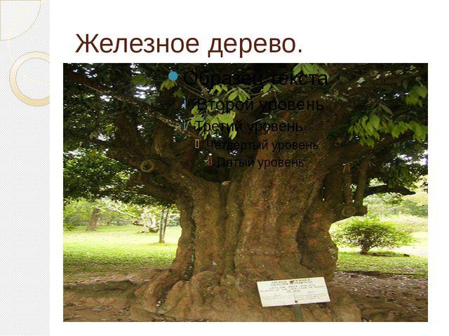 Железное дерево.