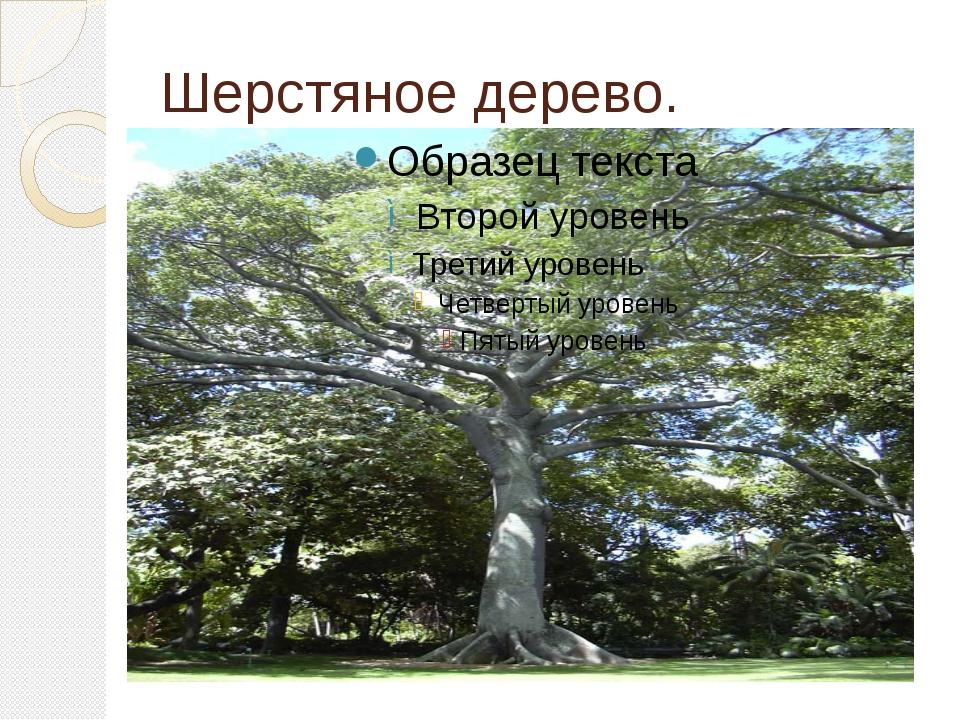 Шерстяное дерево.