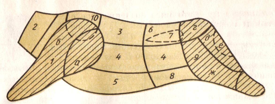 Схема разделки туши говядины: