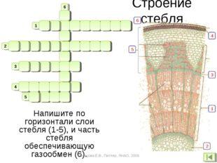 Строение стебля м б п р о б в н а е ч е ч и ч к а к в и н а о р в е с и а 1 2