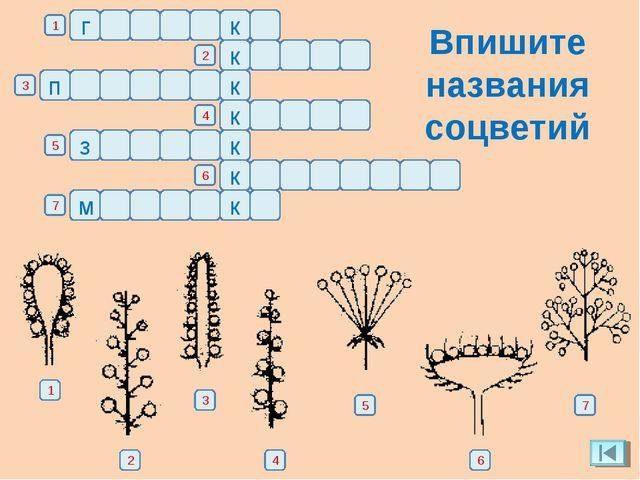 Впишите названия соцветий г о л о в к а а л к м е т е 1 2 3 4 5 6 7 ь к и с т...