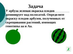 У арбуза зеленая окраска плодов доминирует над полосатой. Определите окраску