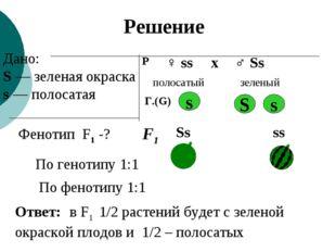 Дано: S — зеленая окраска s — полосатая Фенотип F1 -? Р ♀ ss ♂ Ss х полосатый