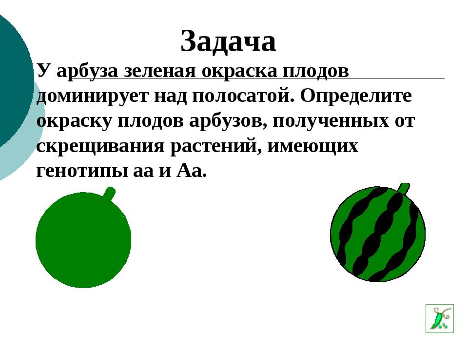 У арбуза зеленая окраска плодов доминирует над полосатой. Определите окраску...