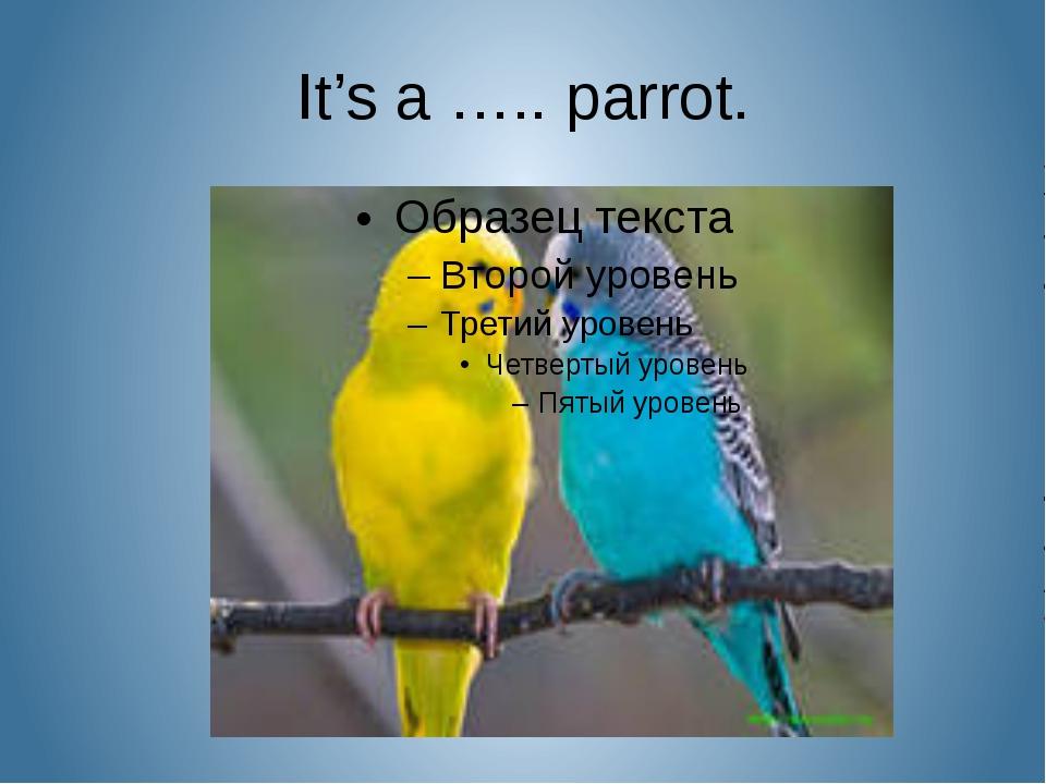 It's a ….. parrot.