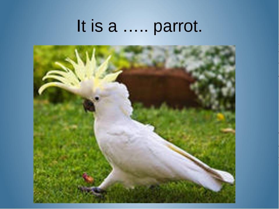 It is a ….. parrot.
