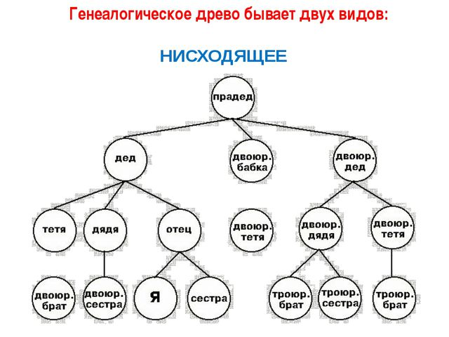 Генеалогическое древо бывает двух видов: НИСХОДЯЩЕЕ