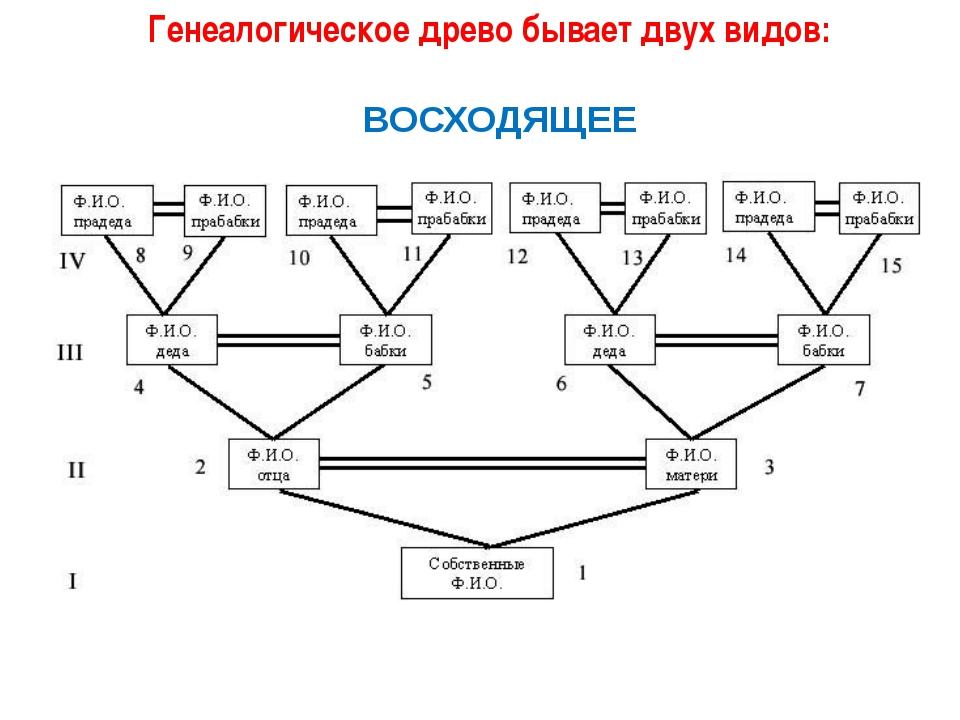 Генеалогическое древо бывает двух видов: ВОСХОДЯЩЕЕ