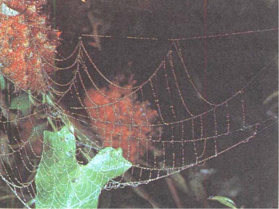 - Кто подсказал человеку идею создания кружевных, плетеных салфеток, скатерте...