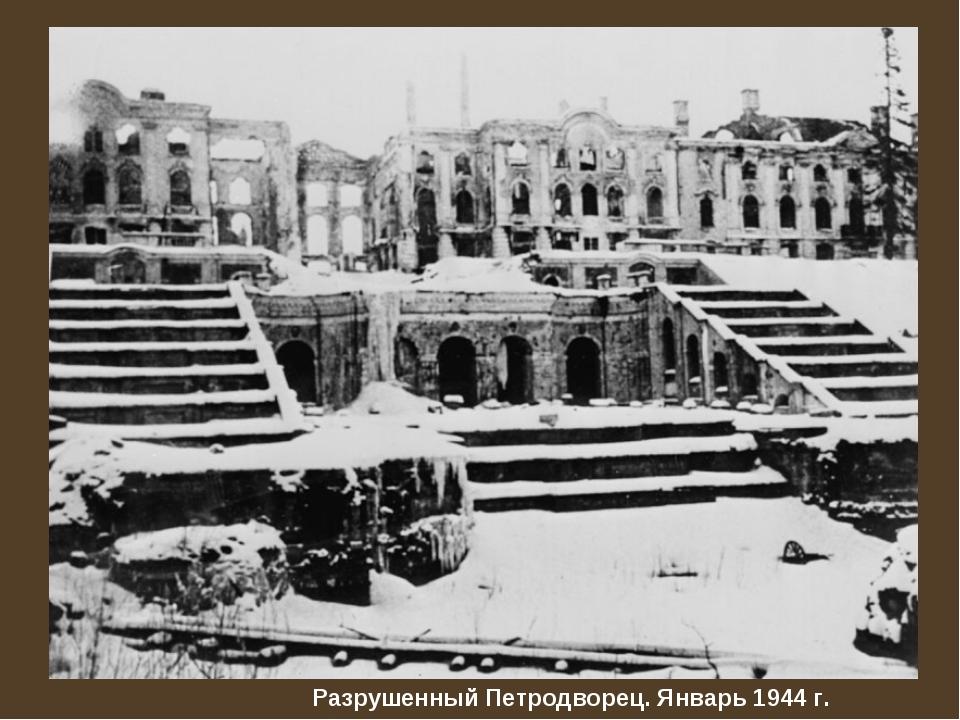 Разрушенный Петродворец. Январь 1944 г.