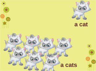 a cat a cats