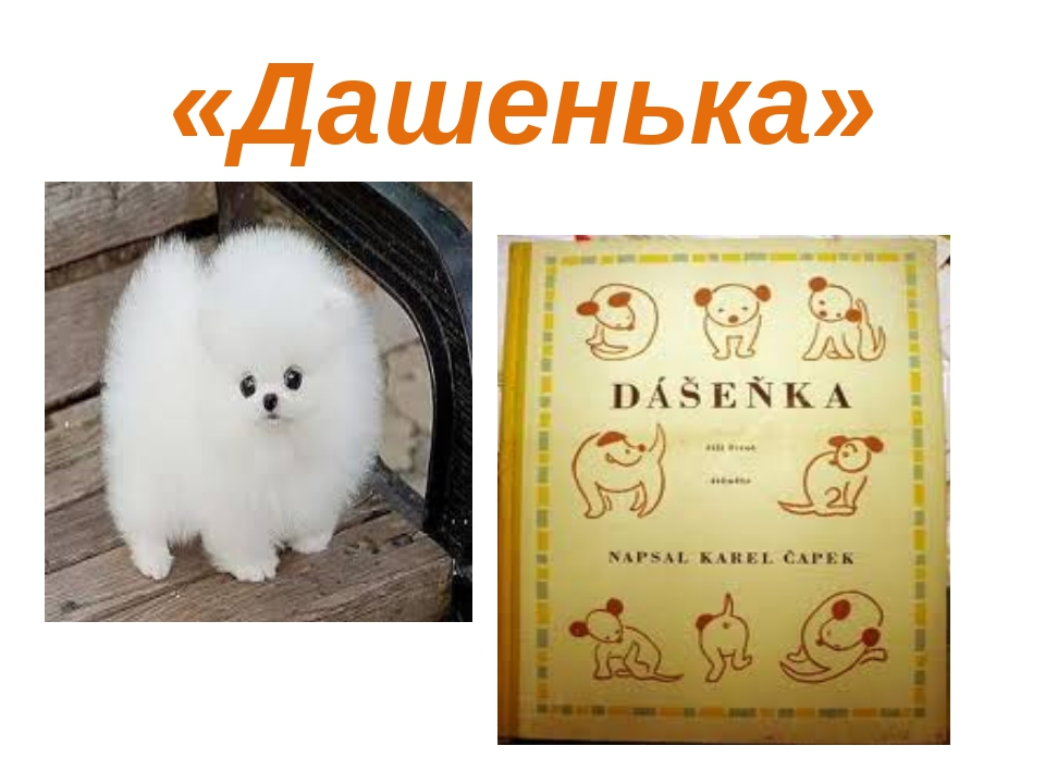 «Дашенька»