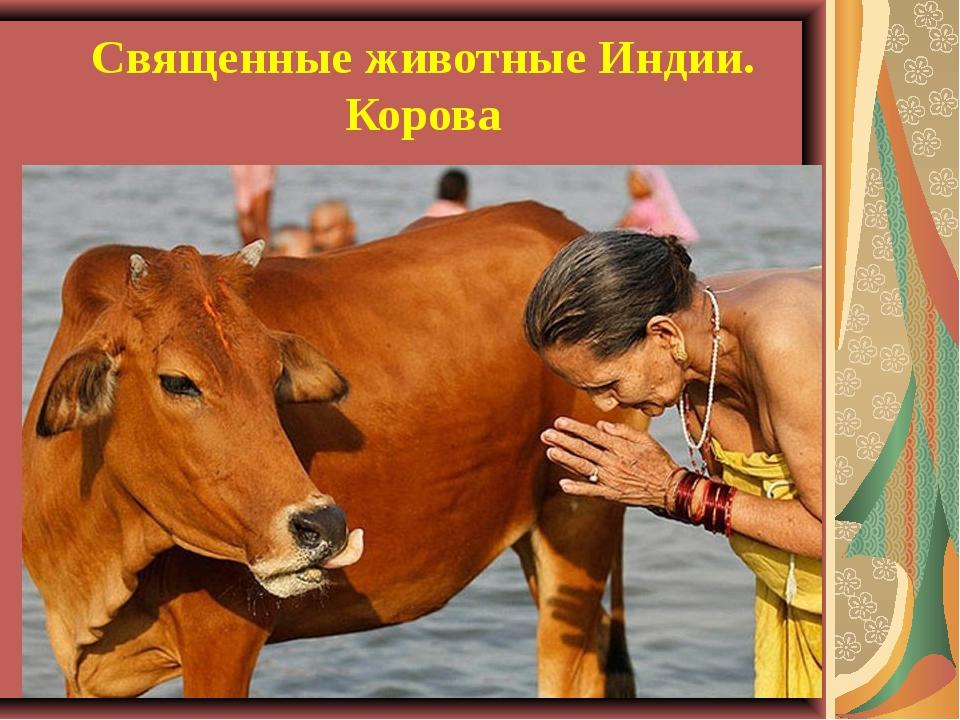 Священные животные Индии. Корова