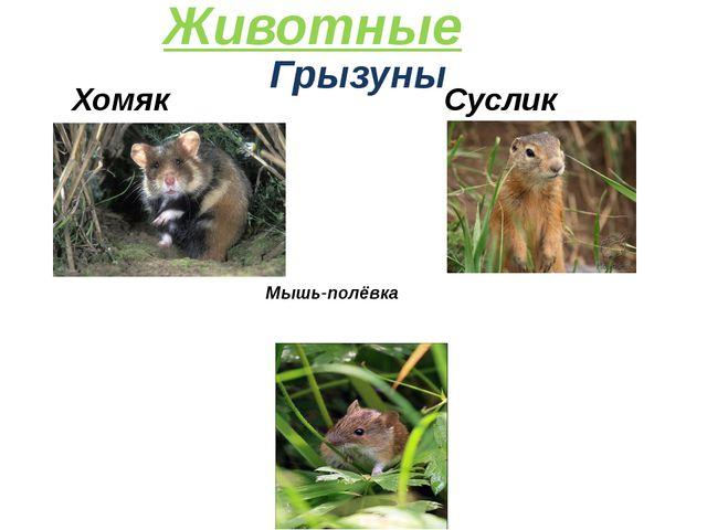Грызуны Суслик Животные Хомяк Мышь-полёвка