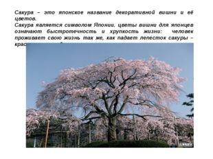 Сакура – это японское название декоративной вишни и её цветов. Сакура являетс