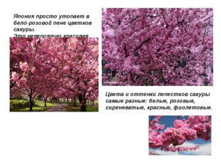 . Япония просто утопает в бело-розовой пене цветков сакуры. Это невероятно кр