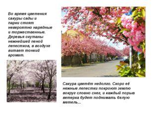 Во время цветения сакуры сады и паркистоят невероятно нарядные и торжественн