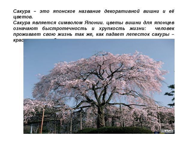 Сакура – это японское название декоративной вишни и её цветов. Сакура являетс...