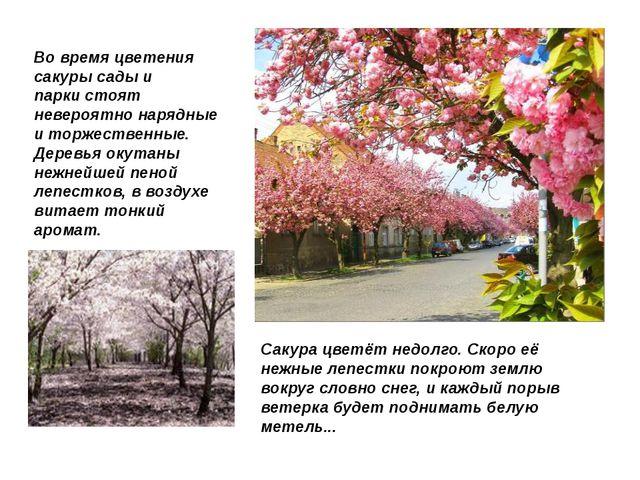 Во время цветения сакуры сады и паркистоят невероятно нарядные и торжественн...