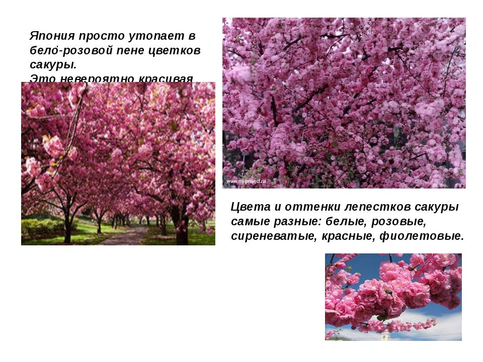 . Япония просто утопает в бело-розовой пене цветков сакуры. Это невероятно кр...