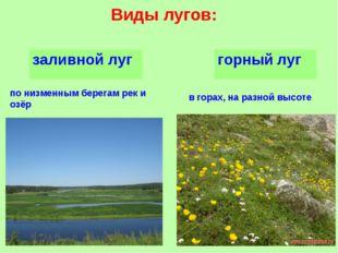 Виды лугов: по низменным берегам рек и озёр в горах, на разной высоте заливно