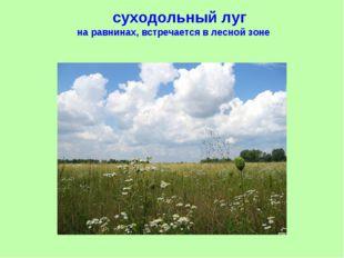 суходольный луг на равнинах, встречается в лесной зоне