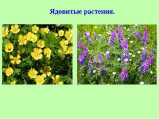 Ядовитые растения.