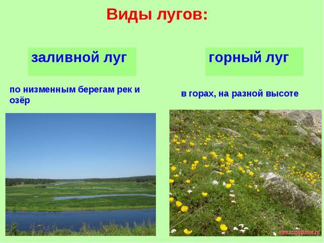 Виды лугов: по низменным берегам рек и озёр в горах, на разной высоте заливно...