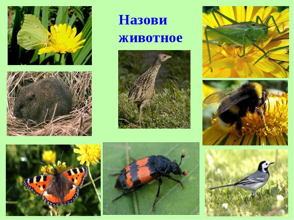 артист животные луга картинки с названиями статей
