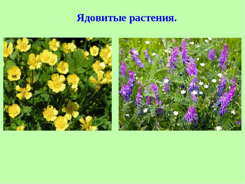 фактически стала ядовитые полевые растения фото и названия подробный обзор