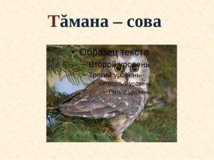 Тăмана – сова