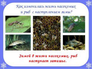 Как изменилась жизнь насекомых и рыб с наступлением зимы? Зимой в жизни насе