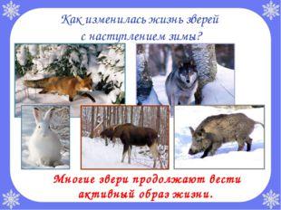 Как изменилась жизнь зверей с наступлением зимы? Многие звери продолжают вес