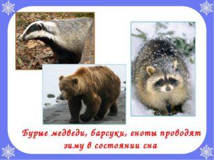 Бурые медведи, барсуки, еноты проводят зиму в состоянии сна