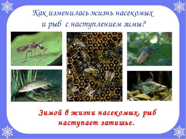 Как изменилась жизнь насекомых и рыб с наступлением зимы? Зимой в жизни насе...