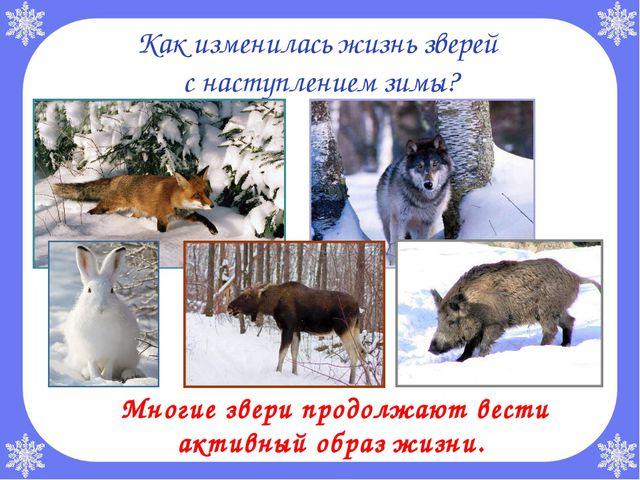 Как изменилась жизнь зверей с наступлением зимы? Многие звери продолжают вес...