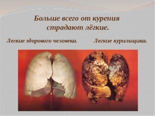 Больше всего от курения страдают лёгкие. Легкие здорового человека. Легкие ку