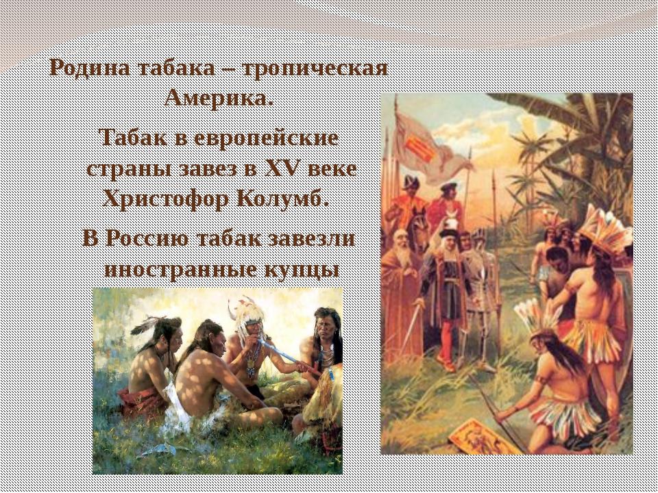 Родина табака – тропическая Америка. Табак в европейские страны завез в XV ве...