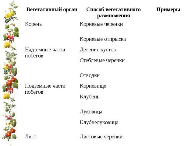 Вегетативный органСпособ вегетативного размноженияПримеры КореньКорневые ч...
